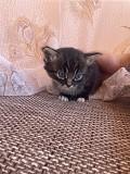 Котята в ДАР Минск