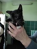 Коты котята Минск