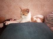 Котёнок Слуцк