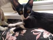 Котёнок Гомель