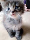 Котята даром Брест