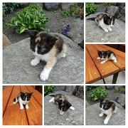 Котёнок Минск