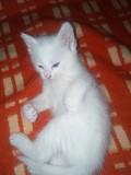 Котята даром Могилев