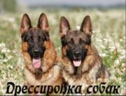 Профессиональная дрессировка собак Минск