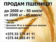 Пшеница! Продам! Логойск