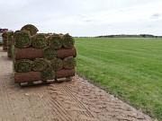 Рулонный газон в Минске Минск