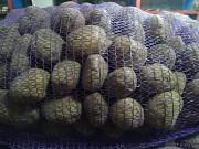 Продам картошку 0, 40 руб. за 1 кг Бобруйск