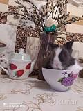 Мини крольчонок Витебск